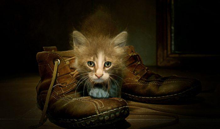 Кот сидит на ботинках