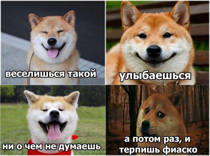 Мем про собаку