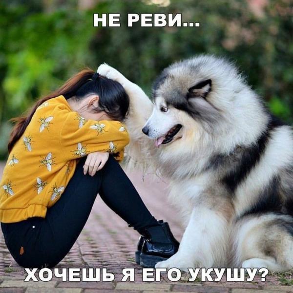Собака утешает девочку