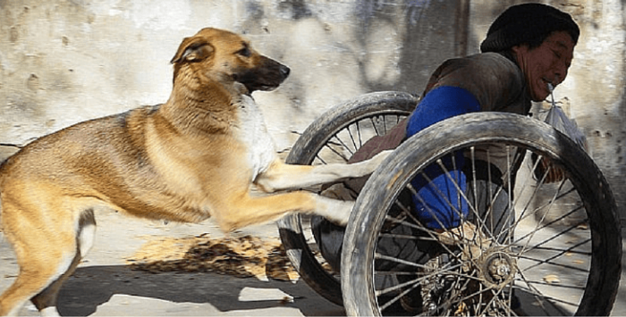 Собака с инвалидом