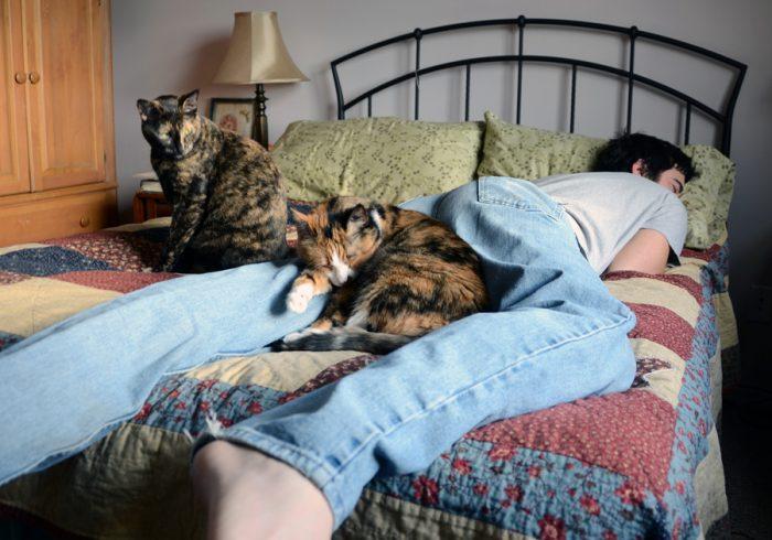 Кошки с человеком на кровати