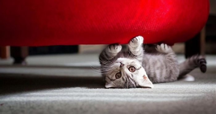 Кошка дерёт диван