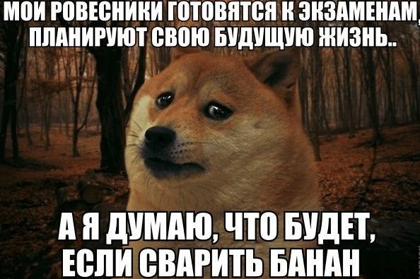 Мем с собакой