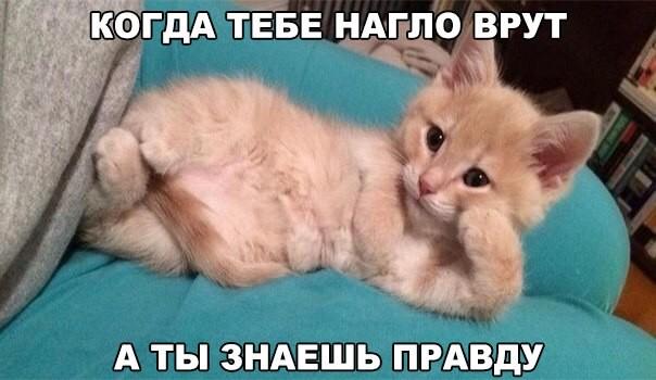 Мемы с кошками