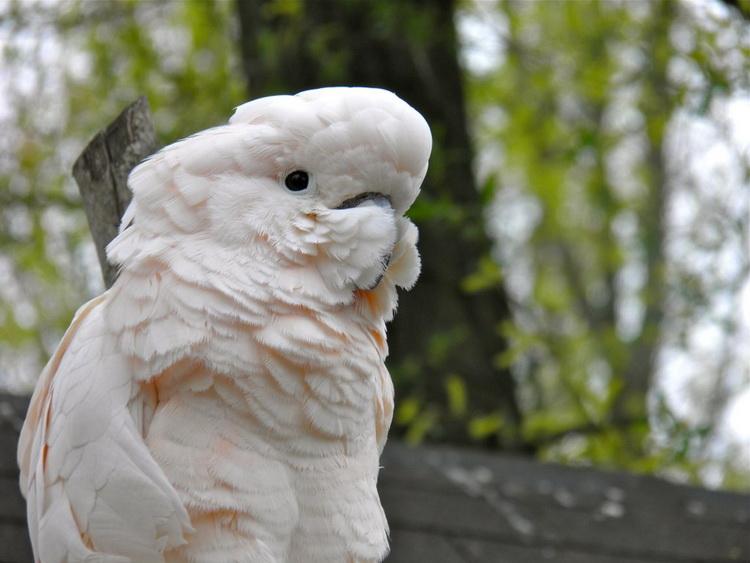 Самые дорогие попугаи в мире топ 10