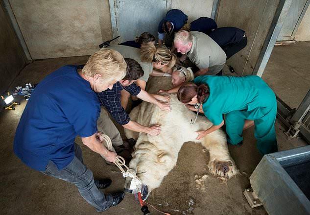 Работники зоопарка проводят осмотр