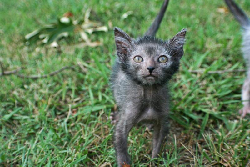 Самая страшная кошка в мире