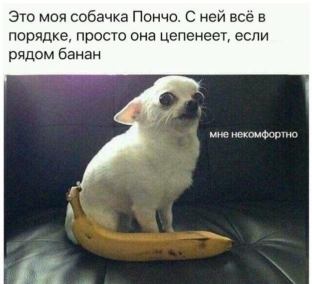 Собака боится банана