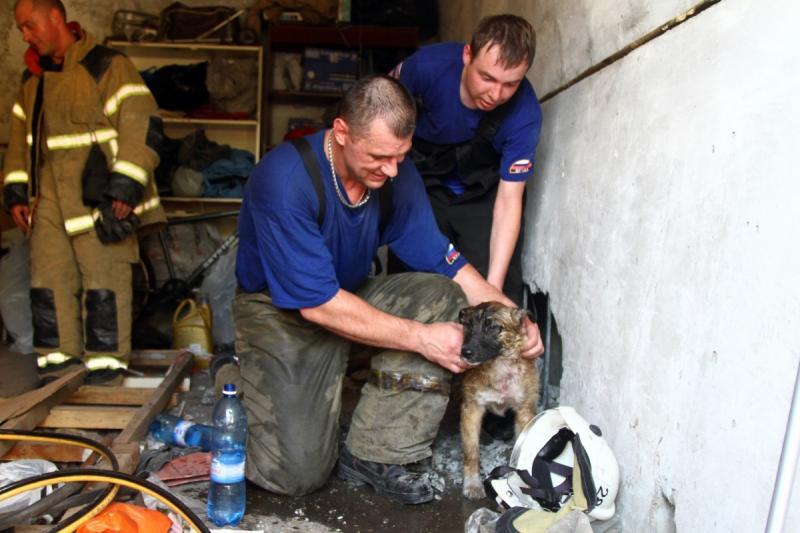 Омский пожарник спас щенка от «бетонной» смерти