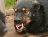 Укусила собака: что делать?