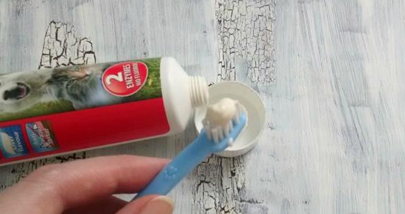 Зубная паста и щетка для собак