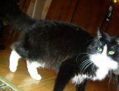 черно-белая кошка с котятами