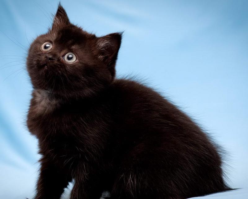 Чёрный котёнок из приюта неожиданно поменял цвет