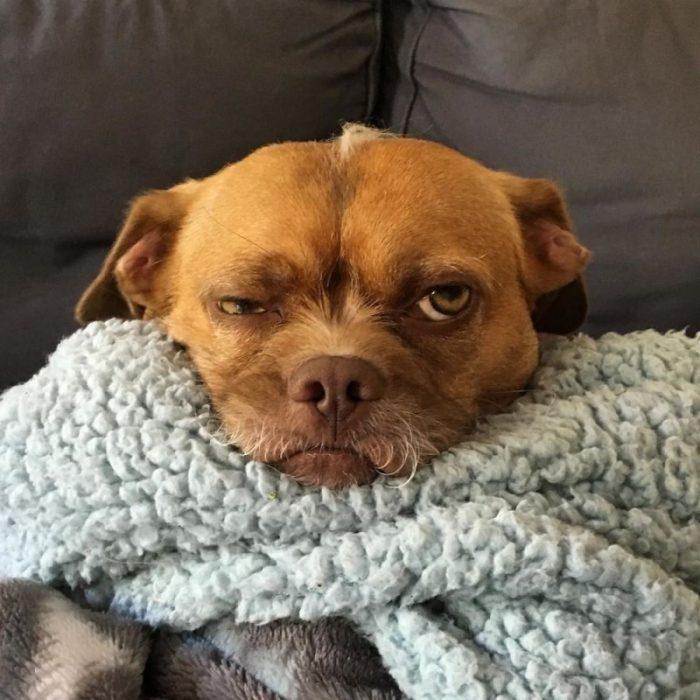 Эмоциональная собака Бекон