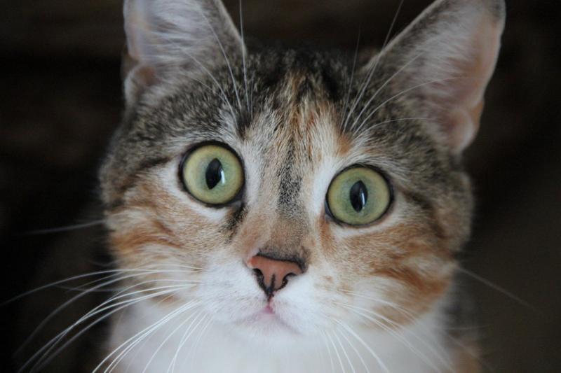10 кошек до и после того как их подобрали с улицы