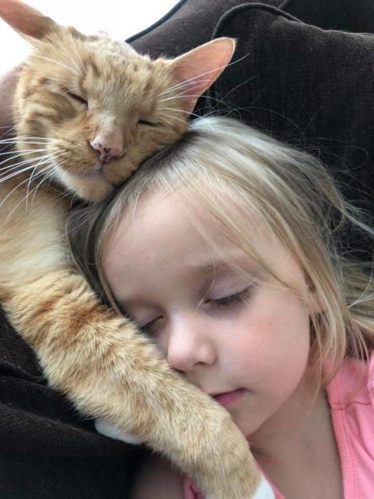 Кот проводит много времени с девочкой