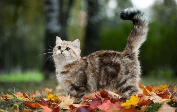 Кот с высоко поднятым хвостом