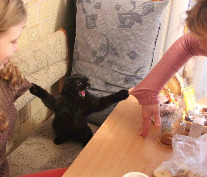 Кошка вцепилась когтями в кофты