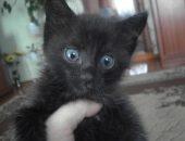 Котёнок. которого спасли в парке трейлеров