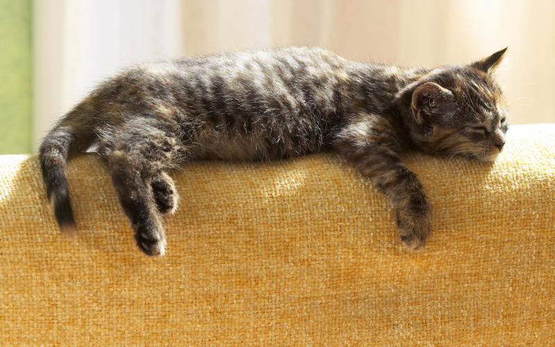 Врач посоветовал усыпить котёнка, но люди дали ему ещё один шанс