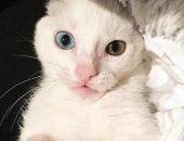 котёнок с лейкемией
