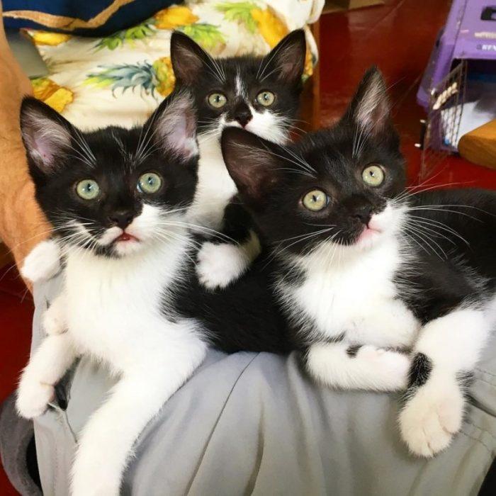 Котята получились копия мамы