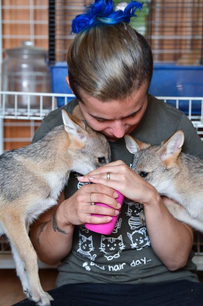Марина Кундж с новыми питомцами