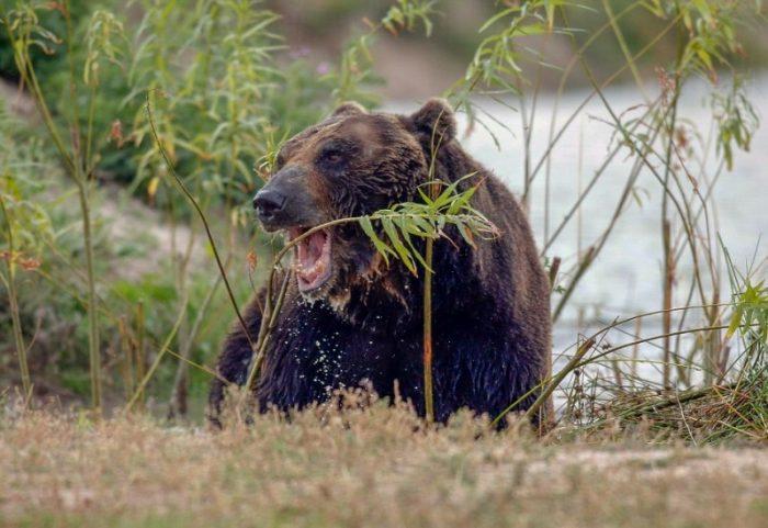 Медведь рад ходить по земле