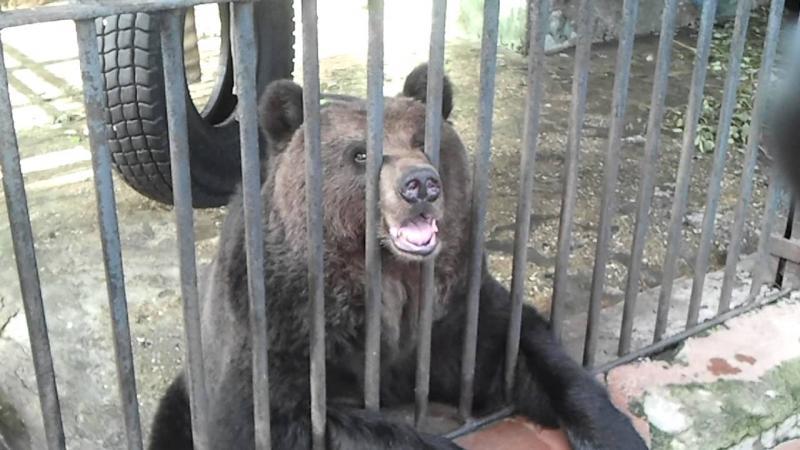 Во Вьетнаме были спасены пять гималайских медведей, которых держали на ферме по сбору желчи