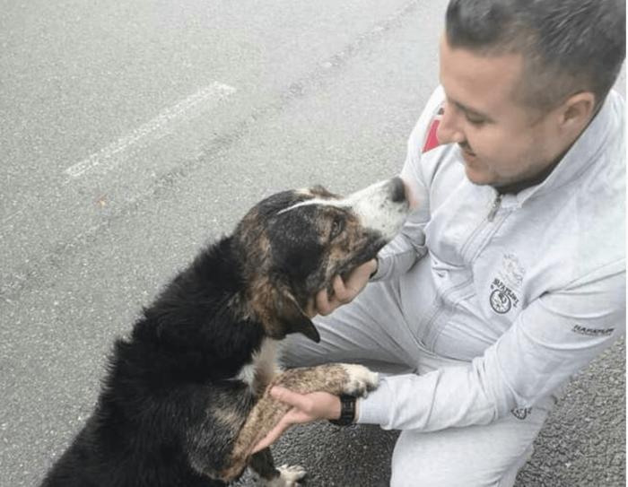 Мужчина и пёс