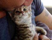 недонощенный котенок