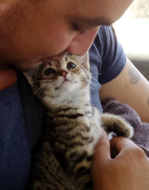 В Австралии люди выходили недоношенного котёнка размером меньше ладони