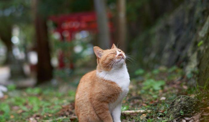 Очень довольный кот сидит зажмурившись