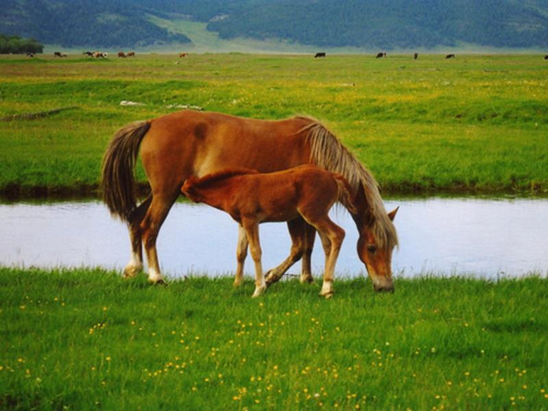 Оленёнок считает лошадь своей мамой