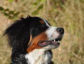 Пёс Харли упал за борт во время шторма и смог доплыть до берега
