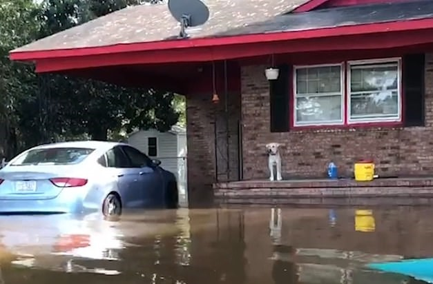 Пёс остался в затопленном доме