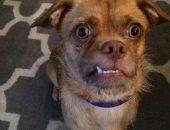 пёс с выразительной мордой