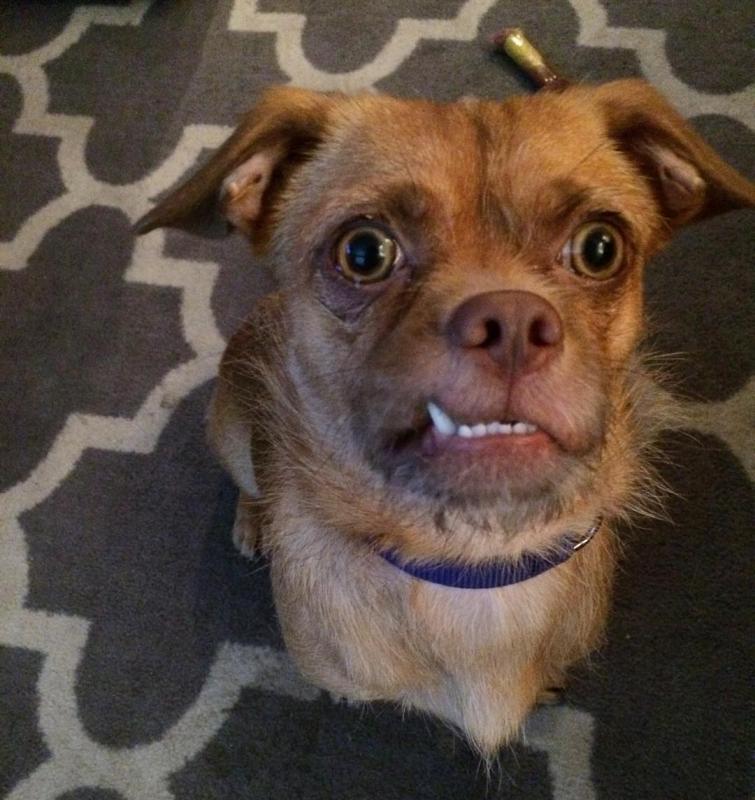 Пёс с невероятно выразительной мордой стал звездой Instagram