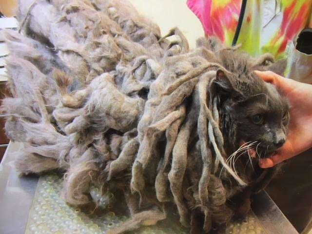 Подкинутый кот со свалявшейся шерстью