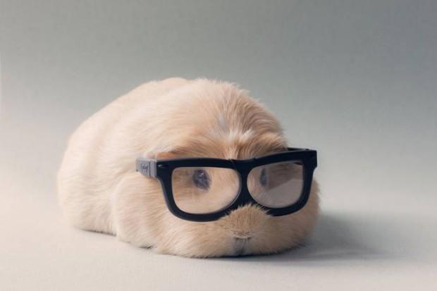 Свинка Бубу в очках с чёрной оправой
