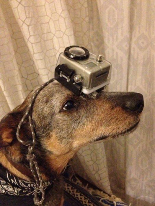 Собака с предметом на голове