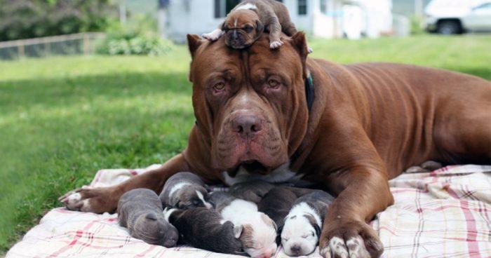 Собака с щенком на голове