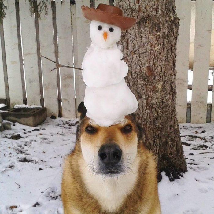 Собака со снеговиком на голове