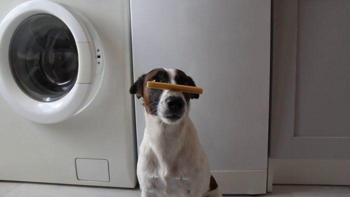 Собака с палочкой на носу