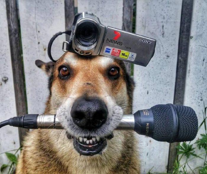 Собака с камерой на голове