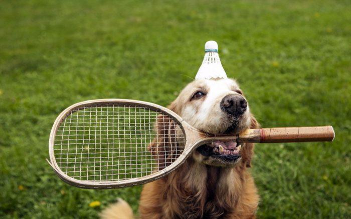 Собака с воланчиком на голове