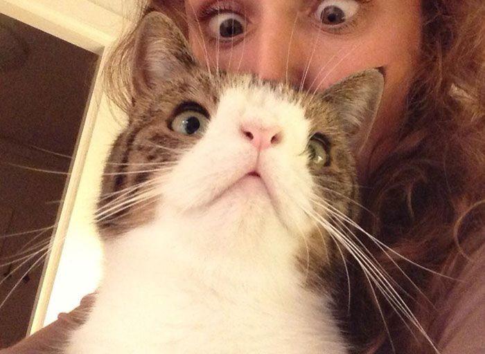 Кот Монти, у которого нет носовой кости