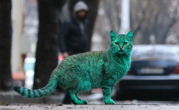 Кот с зелёной шерстью на улице города Варна