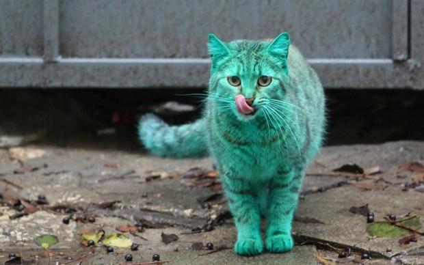 Зелёный кот облизывается