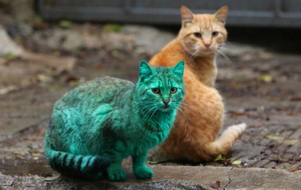 Зелёный кот на фоне рыжего